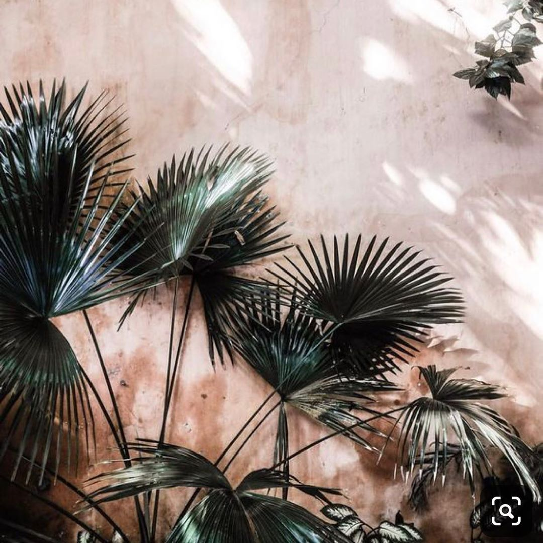 Palm trees can be incorporated into many decor styles. Incorporating
